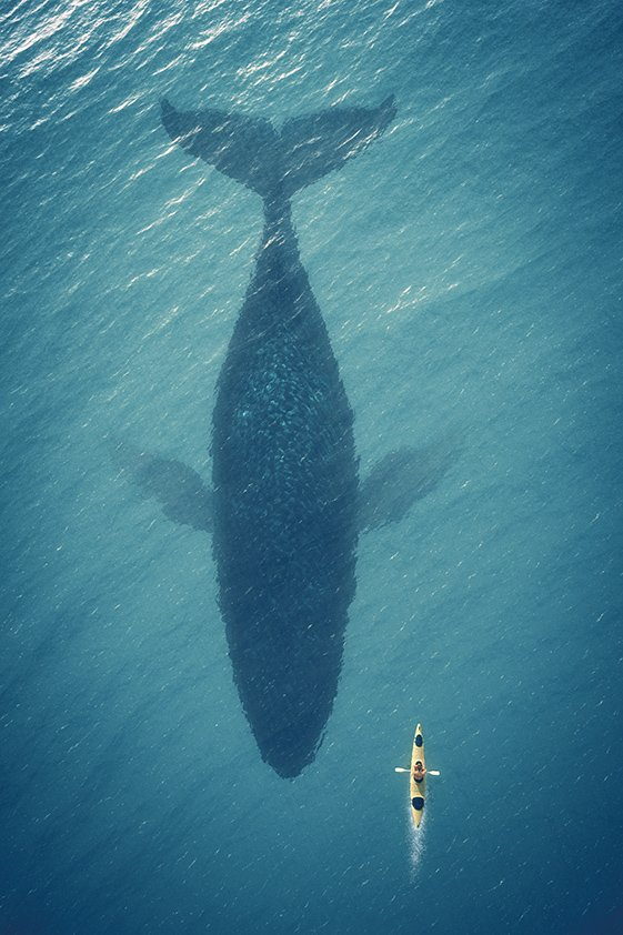 Whale in Reflection of the Sea Aluart