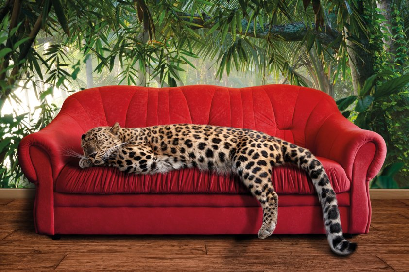 Leopard on Red Couch Aluart