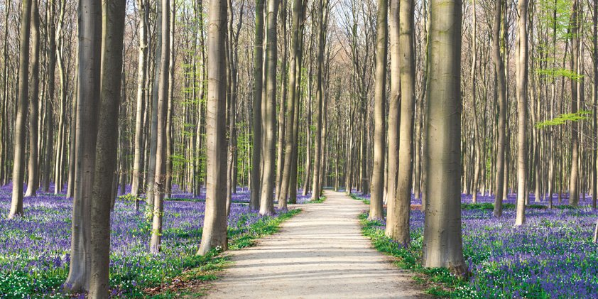 Beautiful Forest with Flowers Aluart