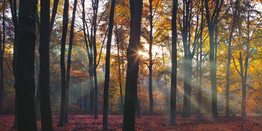 Goodmorning in Forest with Fog Aluart
