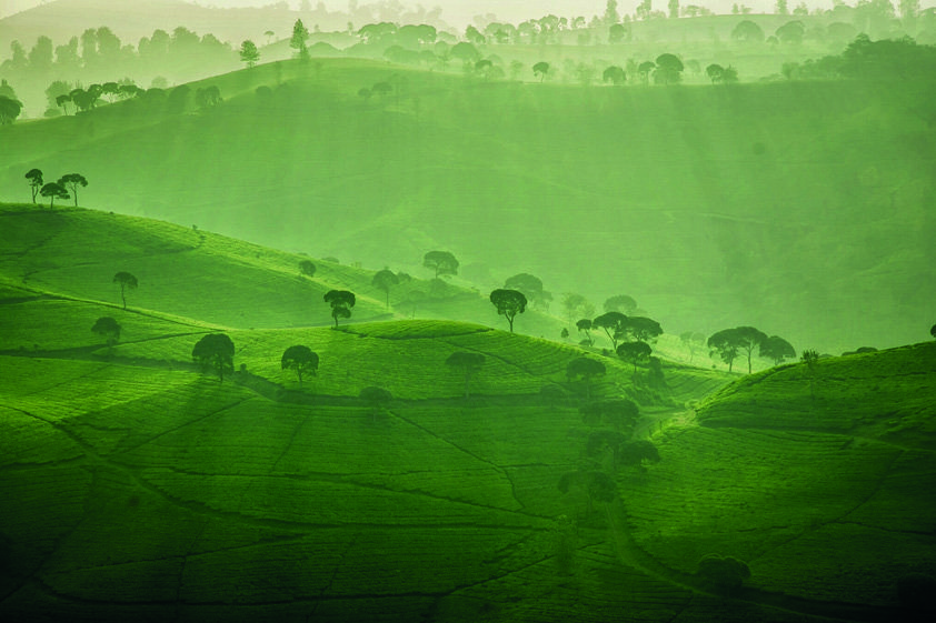 Endless Green Nature in Sunset Aluart