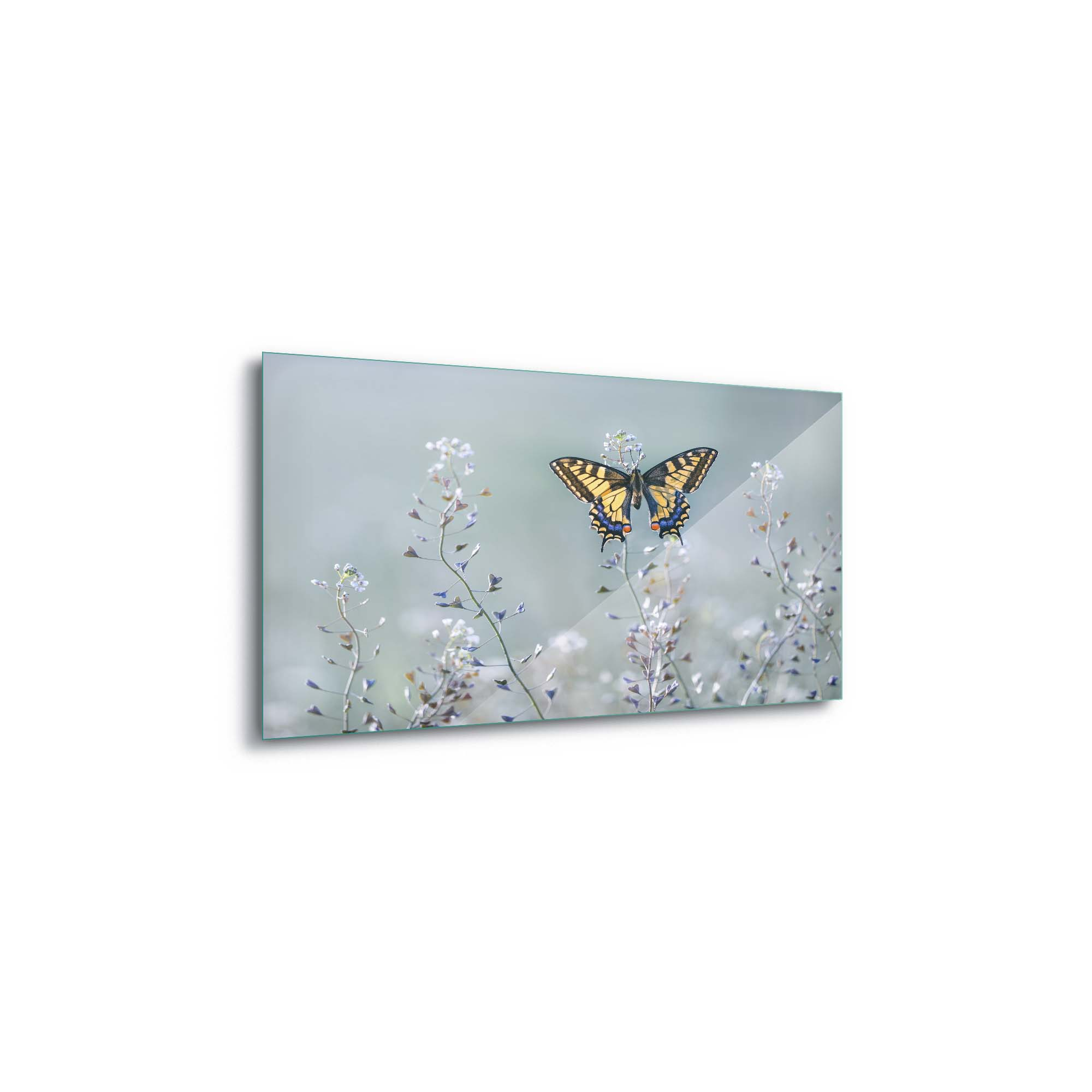 Glass printed Butterfly in Nature