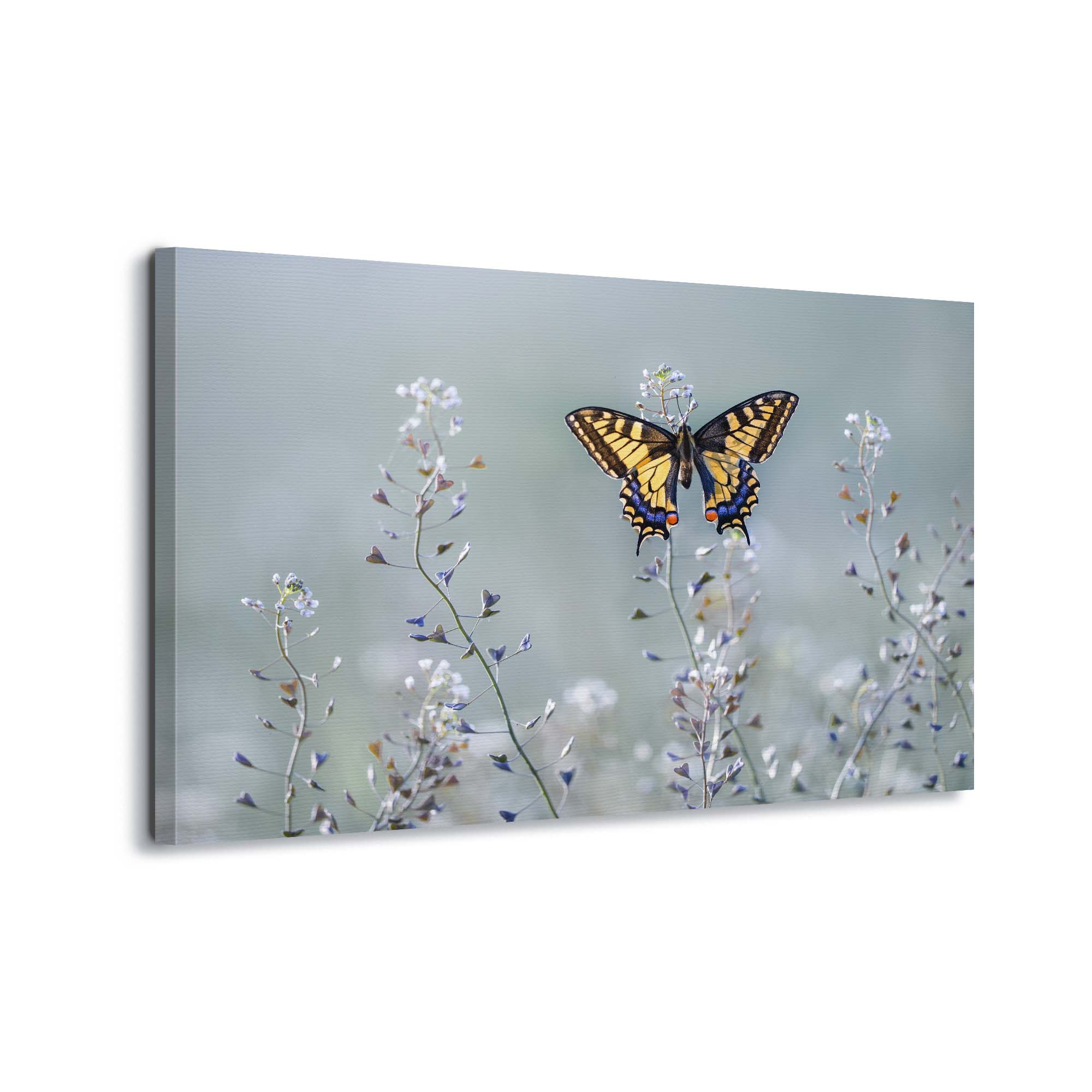Canvas artwork Butterfly in Nature