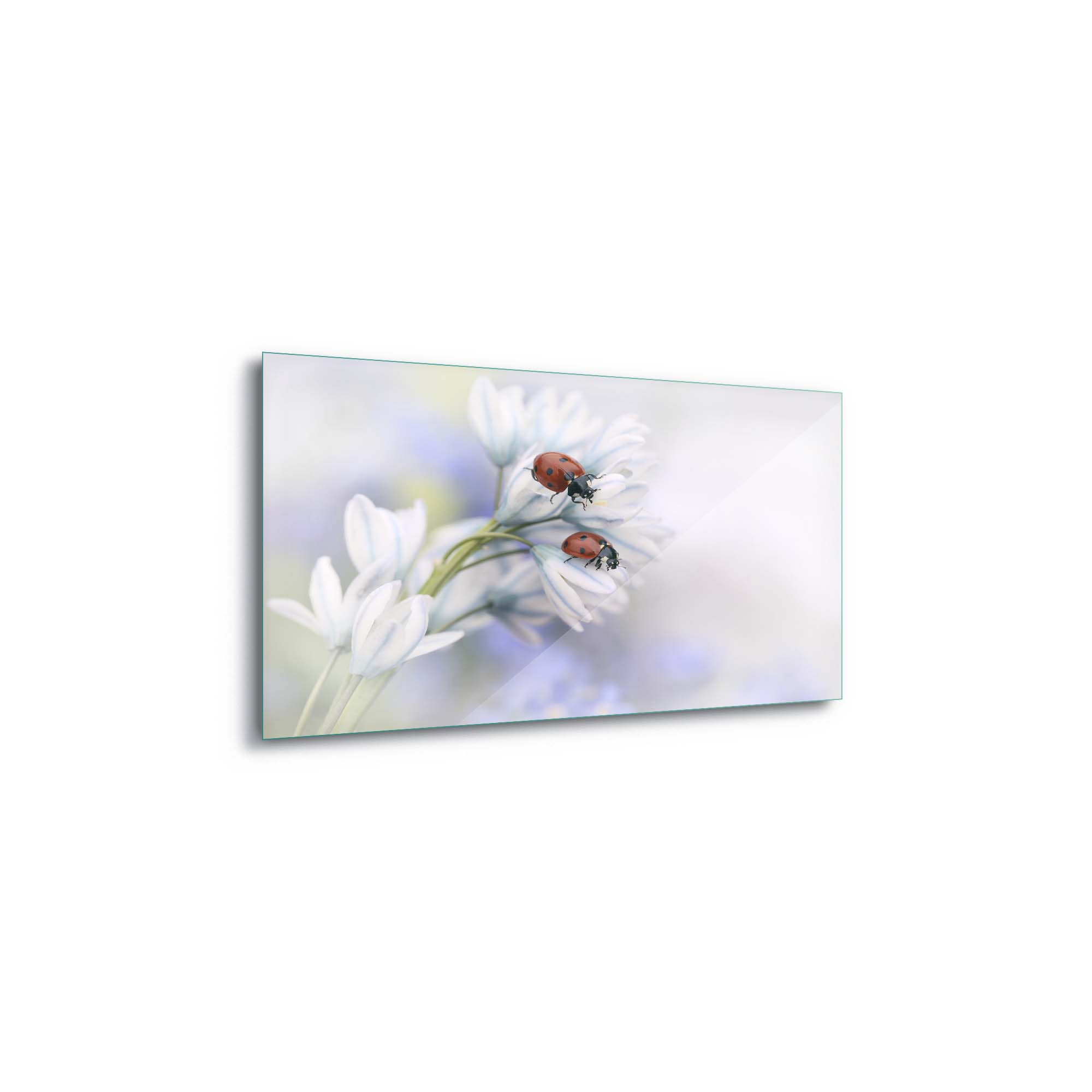 Glass printed Ladybirds on White Flower