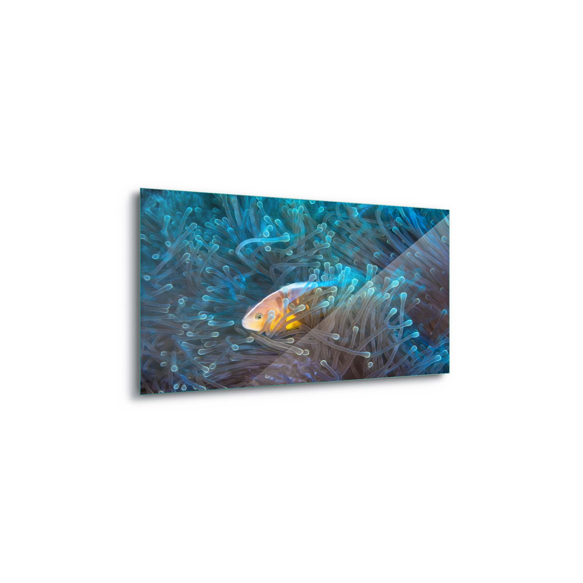 Glass printed Clownfish in The Sea
