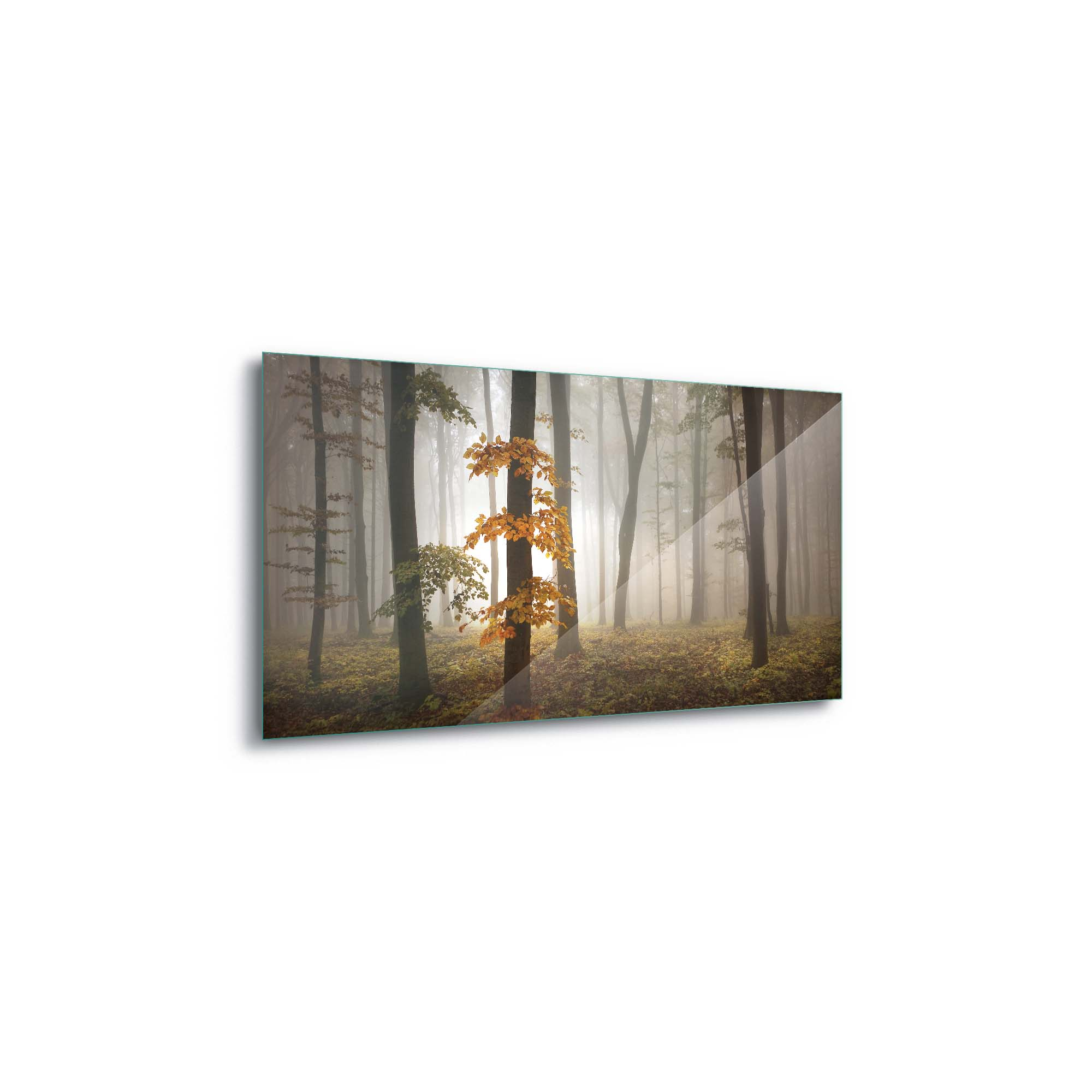 Glass printed Forest in Autumn