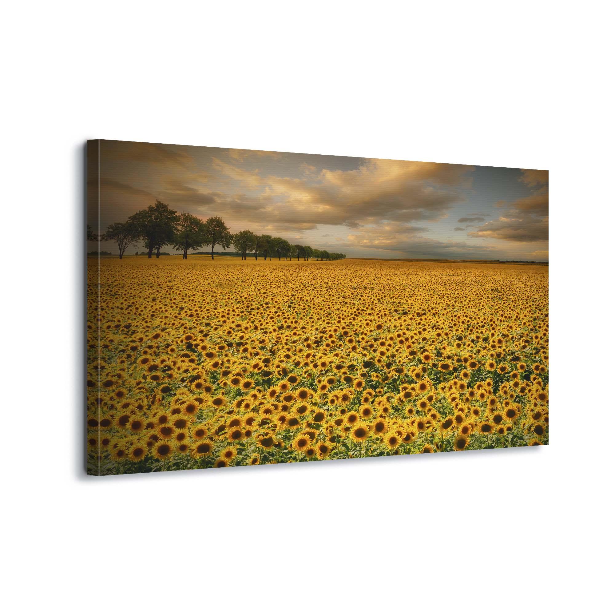 Sunflowers by Piotr Krol