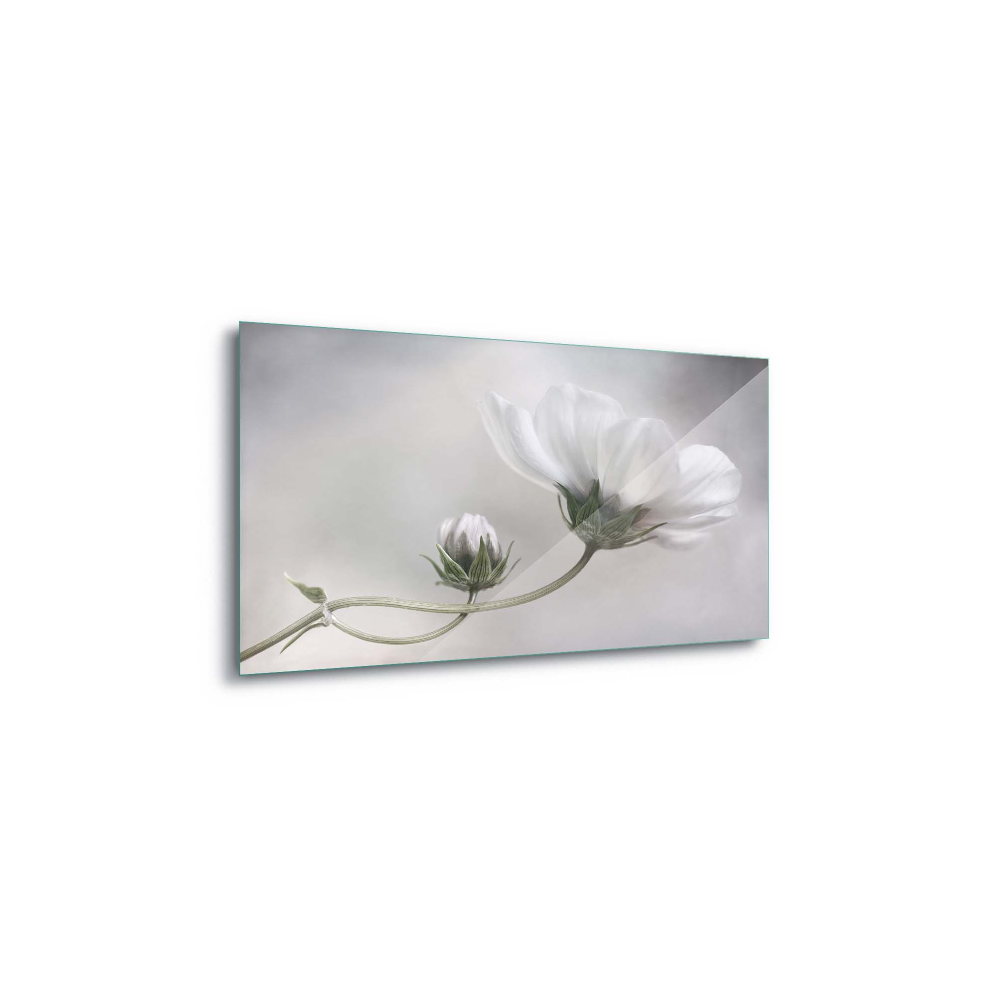 Glass printed Cosmos Flower