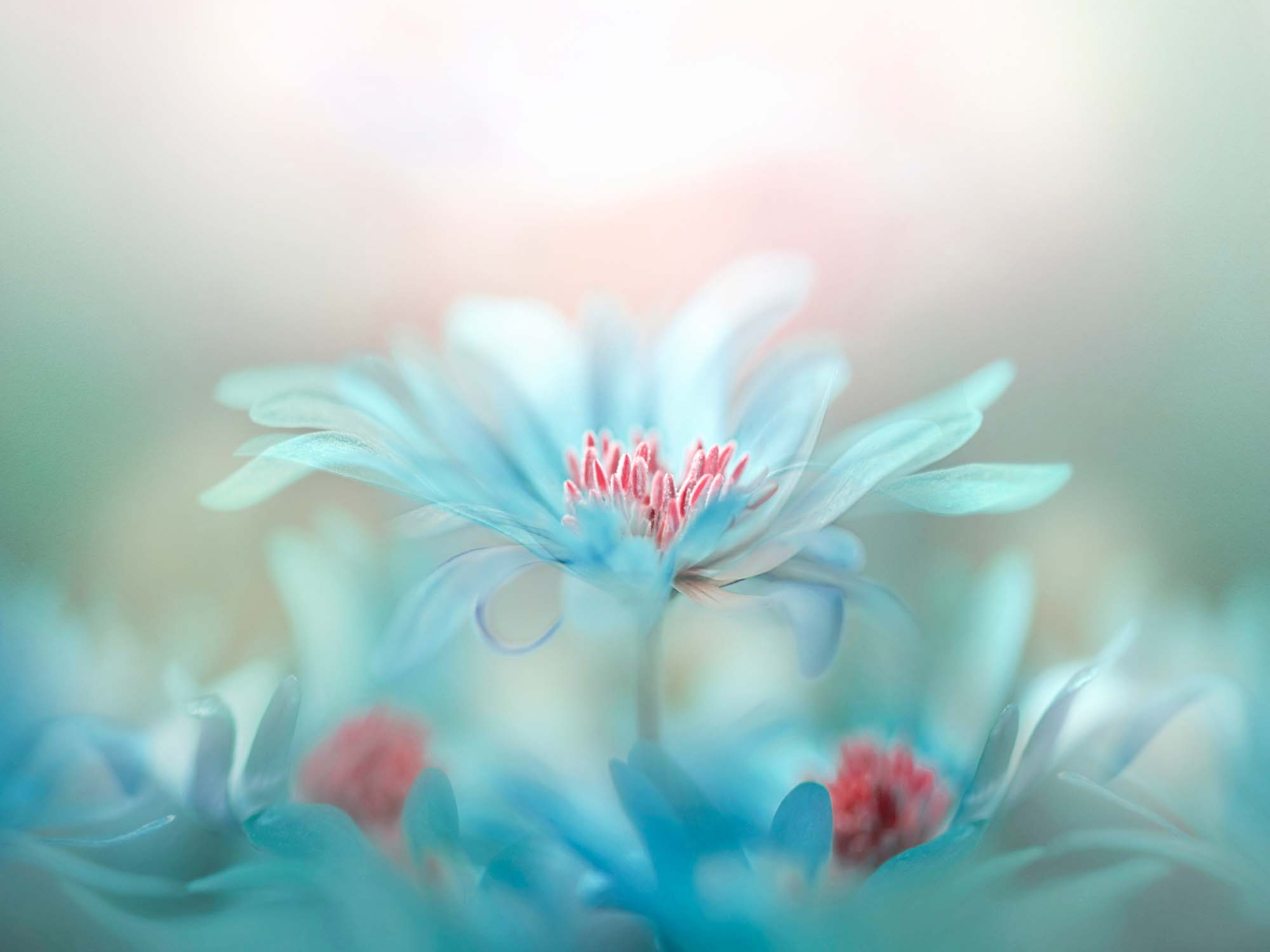 Glass printed Blue Flower in Nature