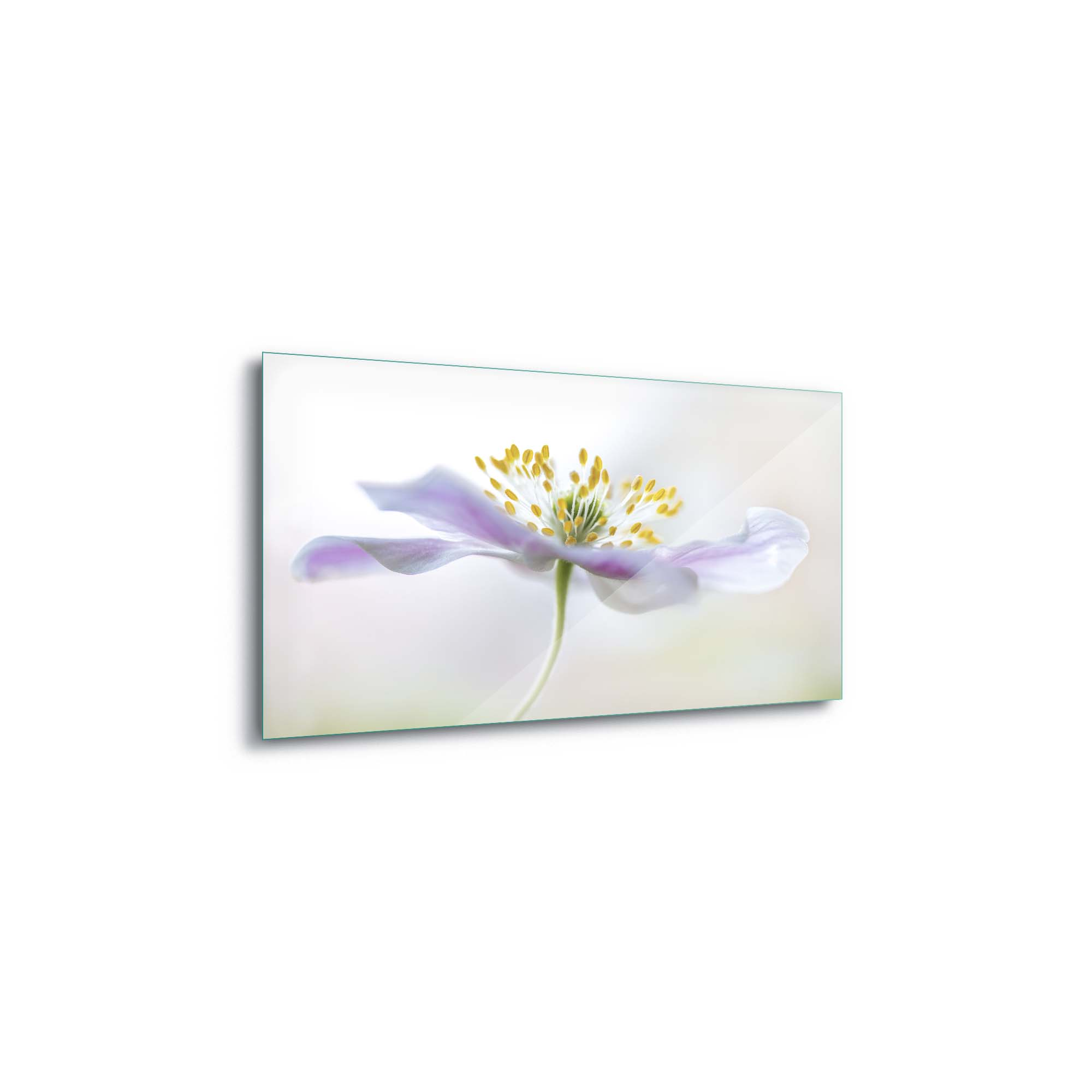 Glass printed Pink Flower with White Background