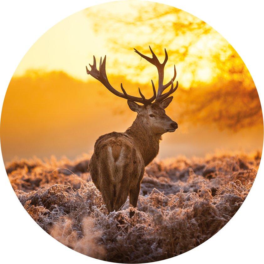 Design Tapijt Deer in Morning sun