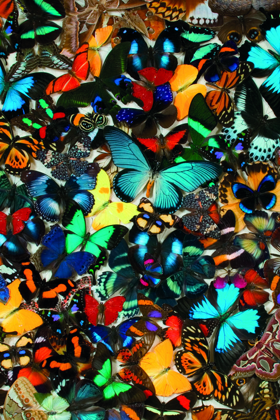 Design Tapijt Tropical Butterfly Chaos