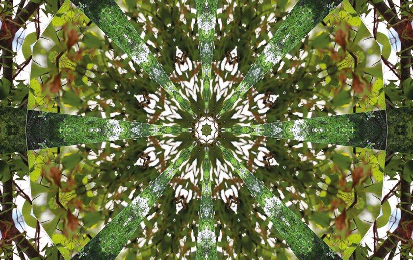 Design Tapijt Green Mysterious