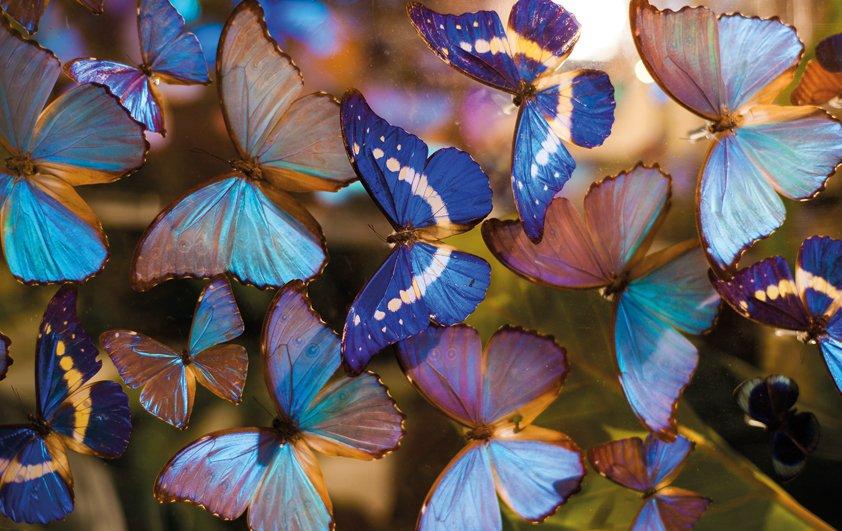 Design Tapijt Butterfly in Color