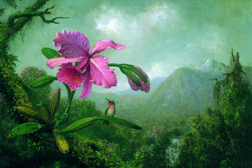 Tuinschilderij Orchid with Overview