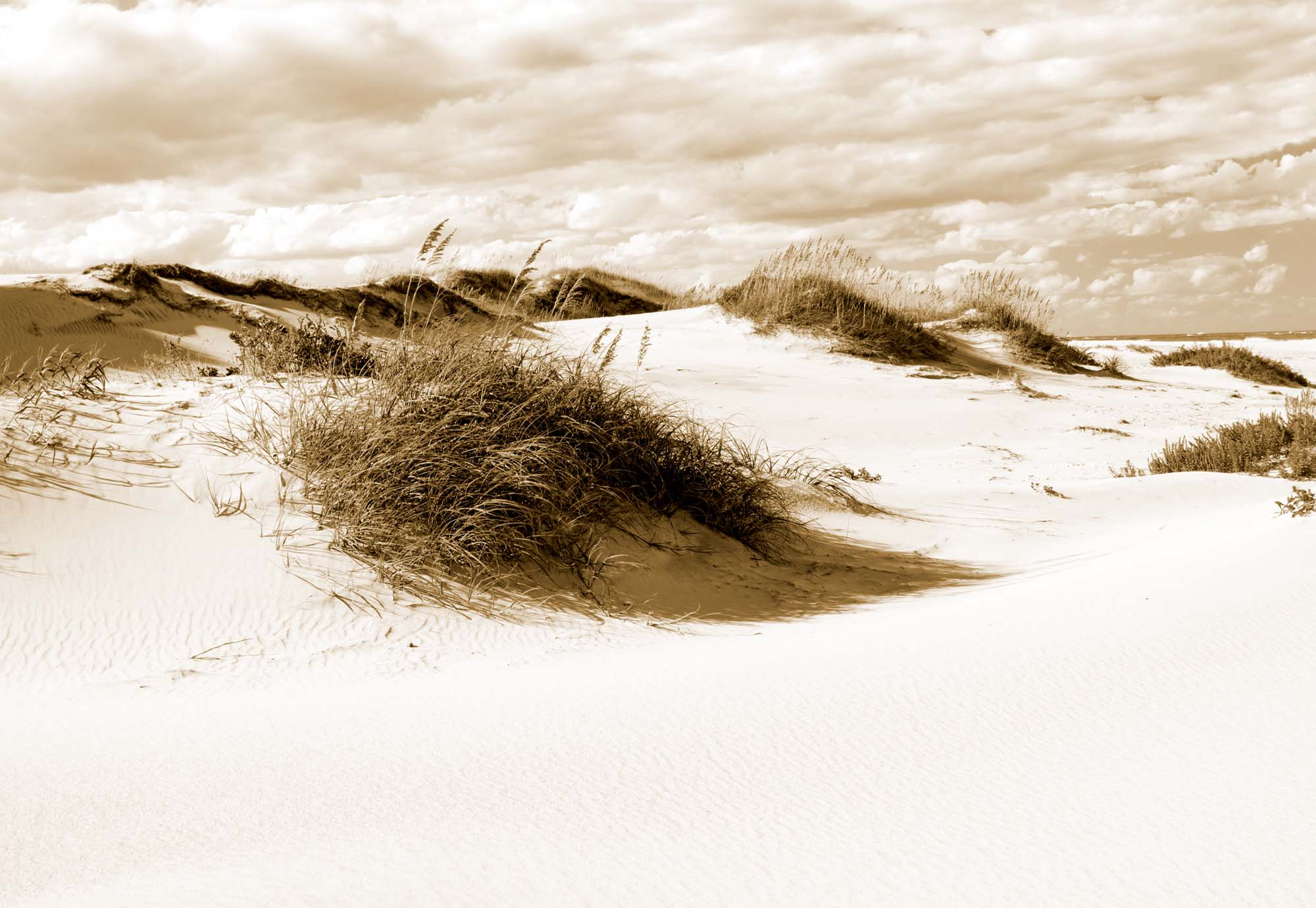 Fotobehang Afternoon in the Dunes in Sepia