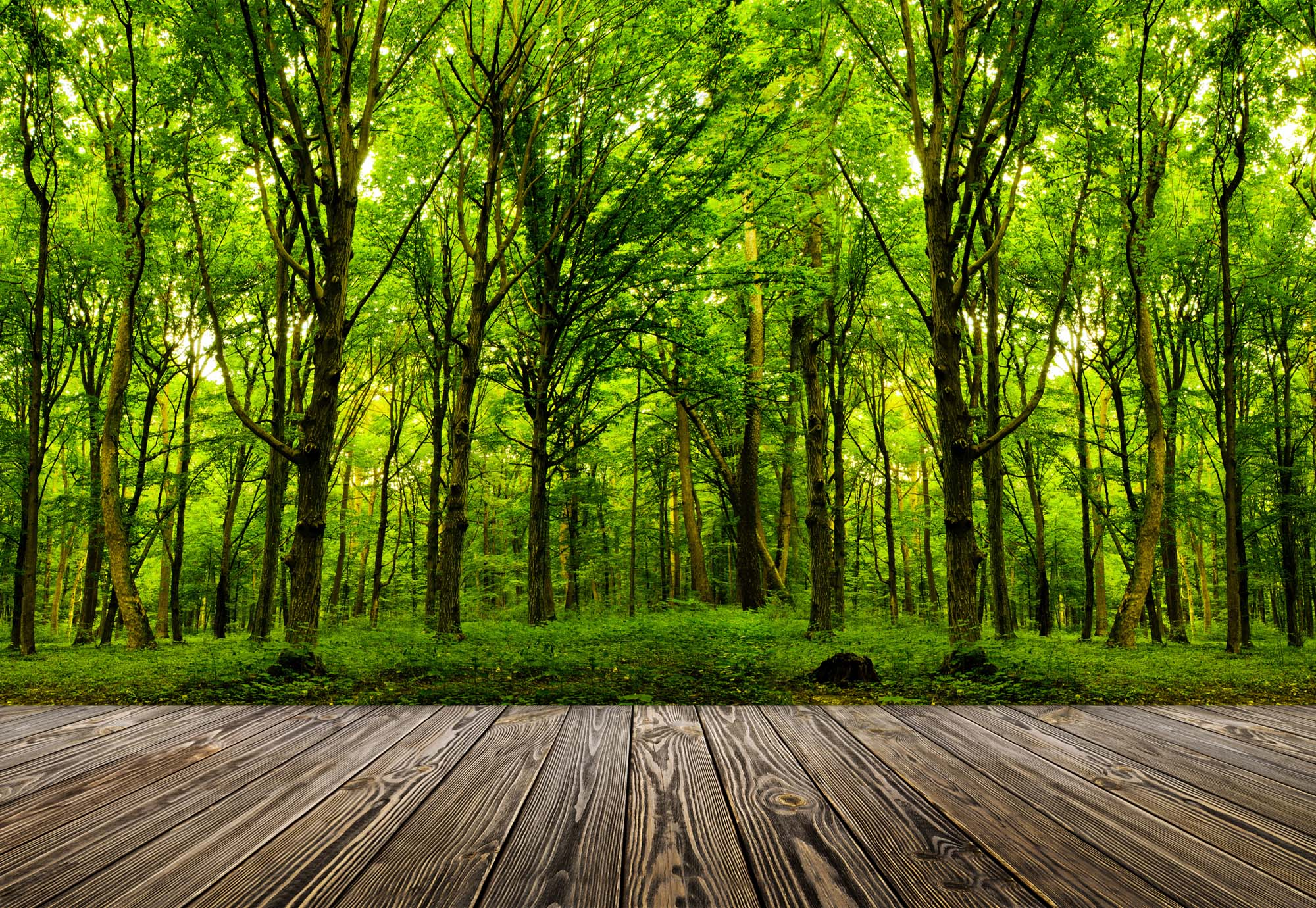 Step into the deep green Wood