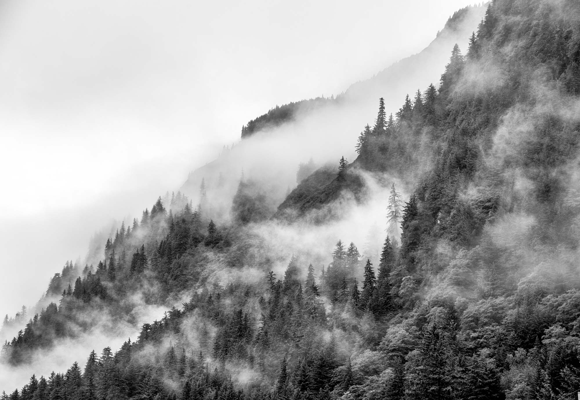 Mist in the Forest Noir