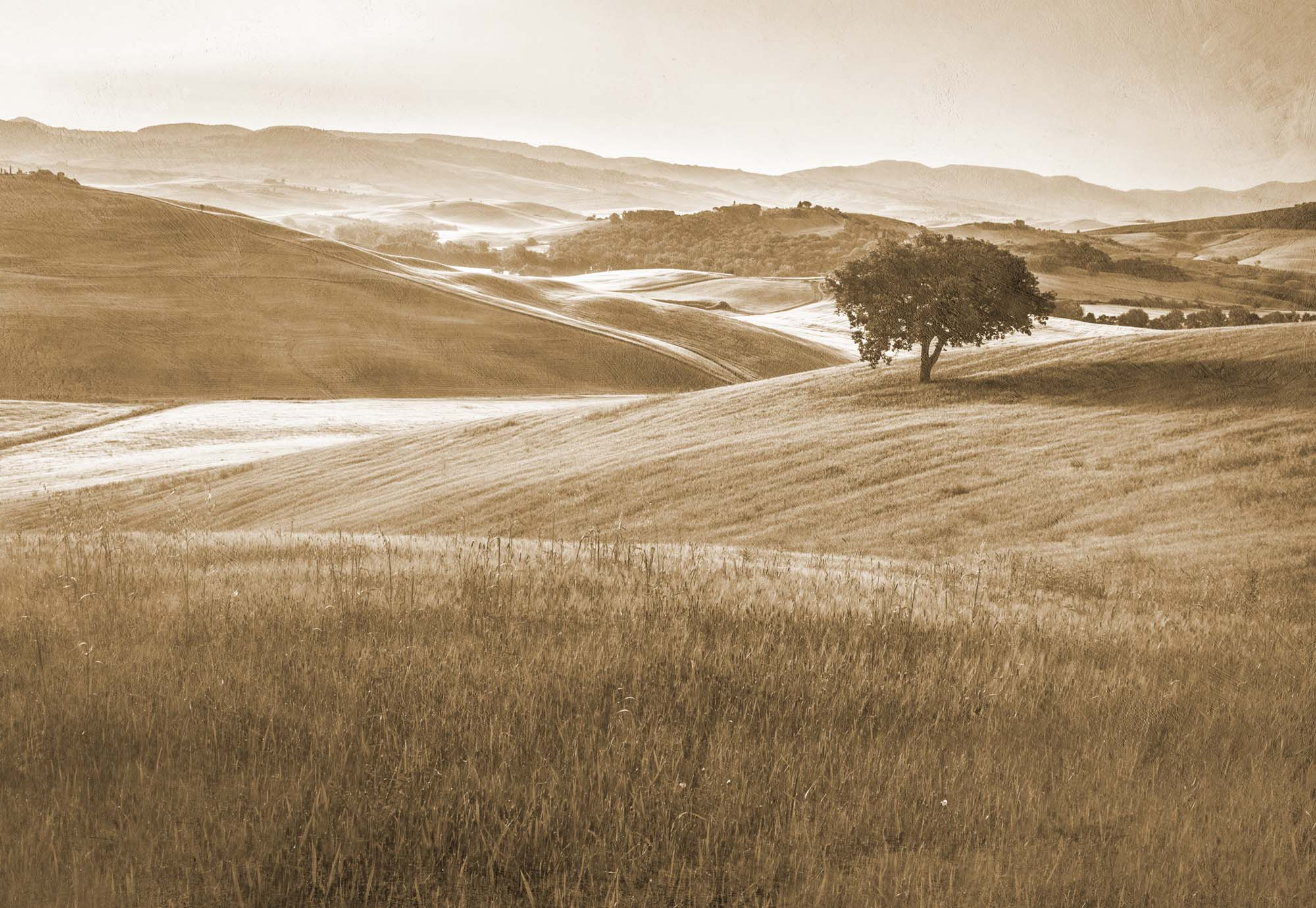 Fotobehang Rolling Nature Hills in Faded Sepia