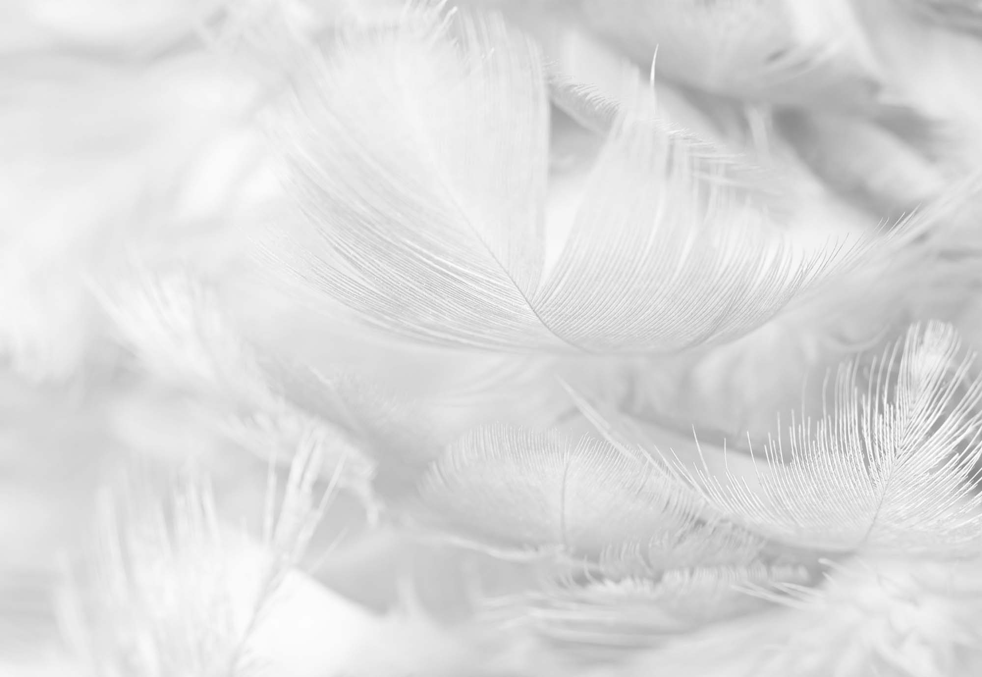 Fotobehang Feathers in Black/White
