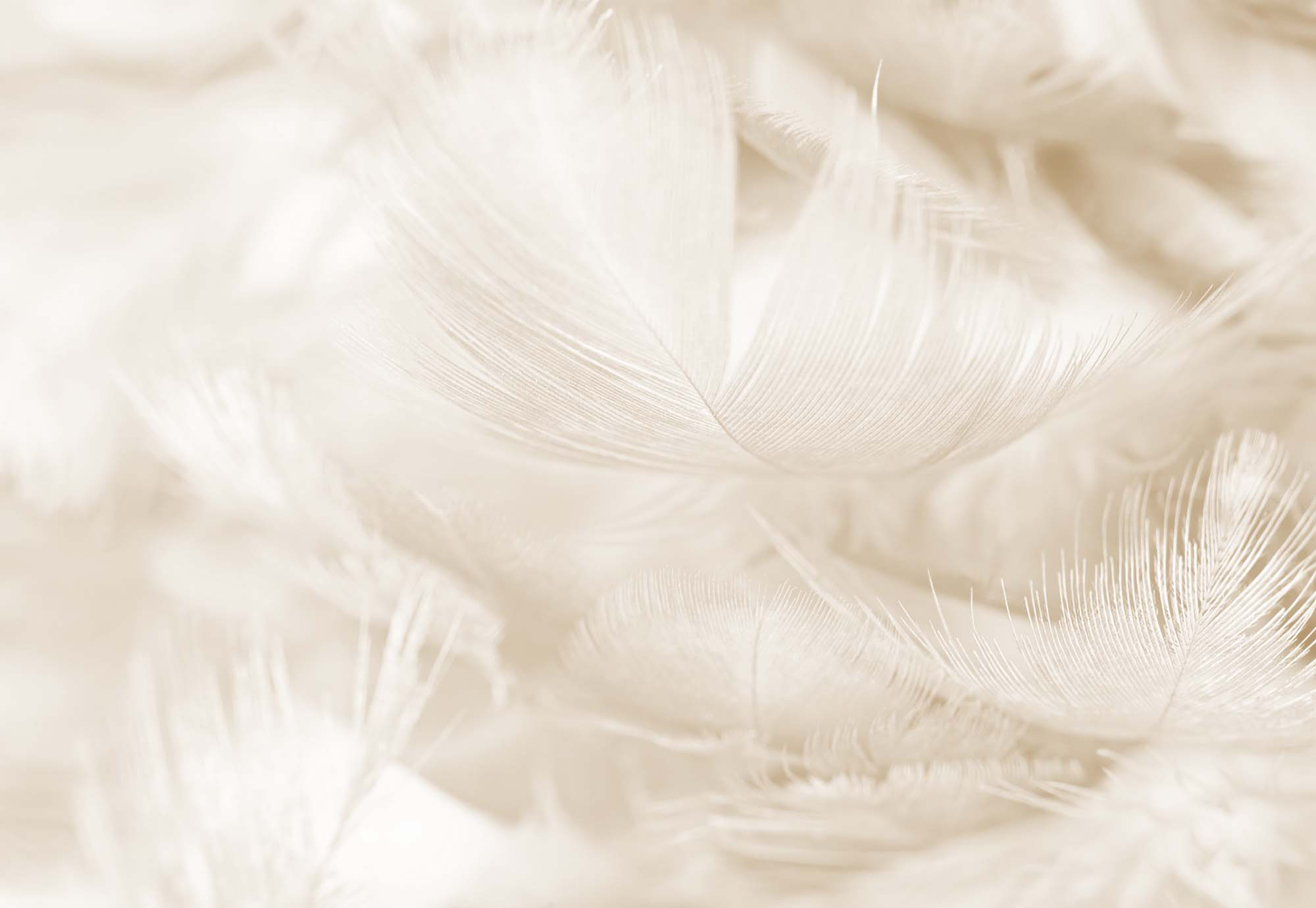 Fotobehang Feathers in Sepia